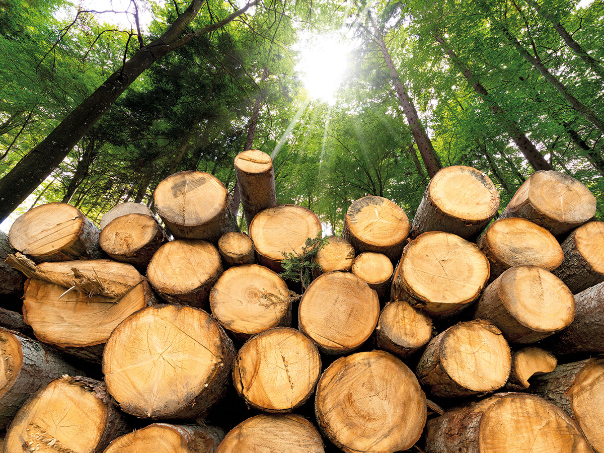 Problems-from-biomass