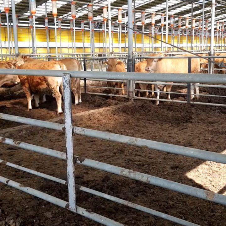 pellet-cow-world-export