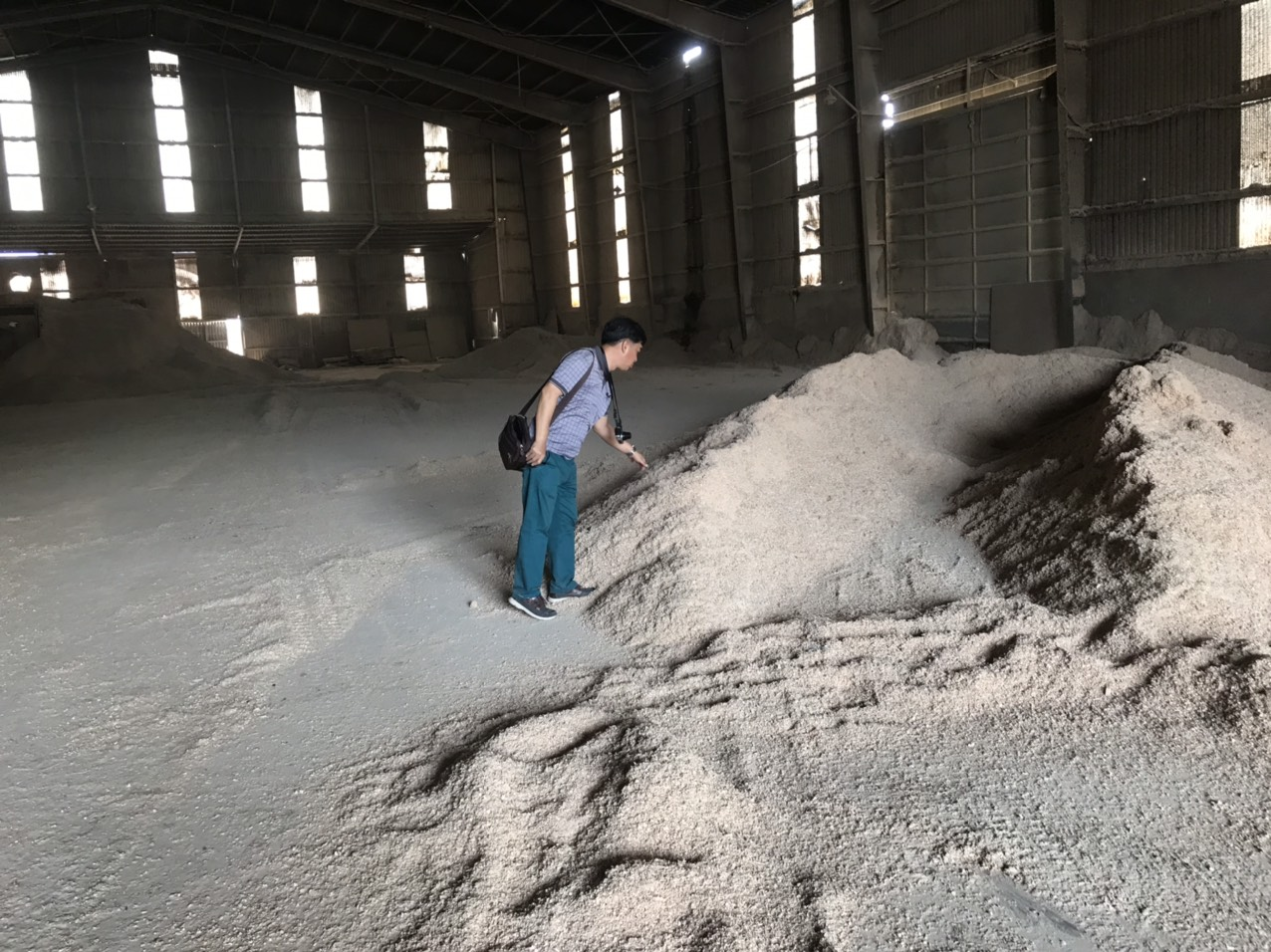 wood-sawdust-shaving-world-export